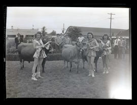 Three costumed young women with cattle