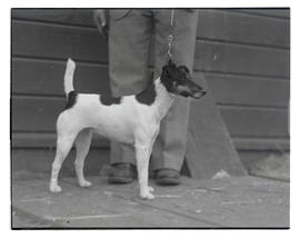 Dog, probably at Pacific International Livestock Exposition