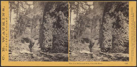 """View from Multnomah Falls, Columbia River."" (Stereograph 1242)"