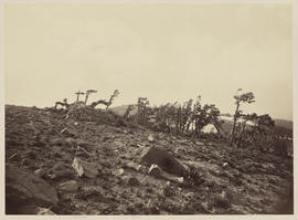 """Mt. Lola. Looking N.W.  Showing effect of wind on trees."" (Mammoth 1259)"