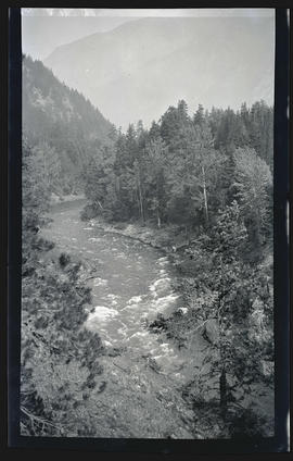 River through trees