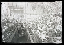 Unidentified boy and girl in greenhouse with Easter lilies