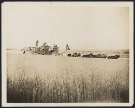 Combine harvester in field in Goldendale, Washington