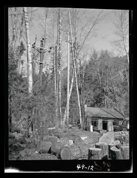 Utility poles in unidentified forested area