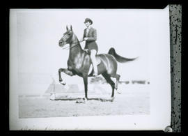 Photograph of saddle seat rider