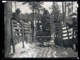 Unloading elk at Billy Meadows
