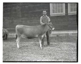 Man with heifer