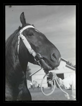 Horse, possibly at county fair