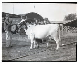 Two women with cow