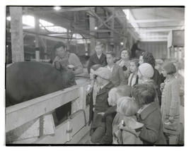 Children looking at cattle