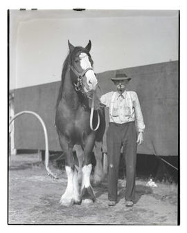 Unidentified man with horse, probably at Pacific International Livestock Exposition