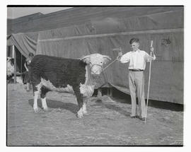 Bobby King with heifer, probably at Pacific International Livestock Exposition