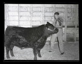Unidentified young man with steer, probably at Pacific International Livestock Exposition