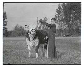 Bobby King with steer, probably at Pacific International Livestock Exposition