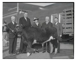 Governor, first lady, and three unidentified men posing with steer at livestock exposition