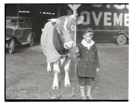 Boy with bull or steer