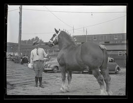 Luther Harrel? with draft horse