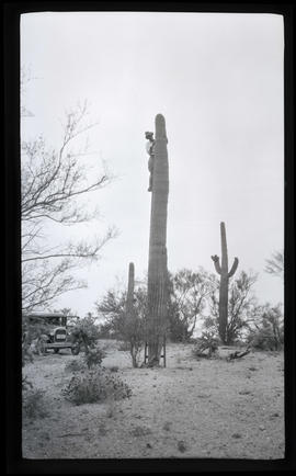 William Finley climbing a cactus