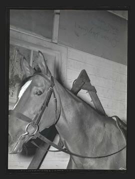 Horse, probably at Pacific International Livestock Exposition