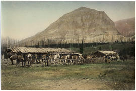 Pack train at corral, Glacier National Park