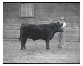 Boy with steer