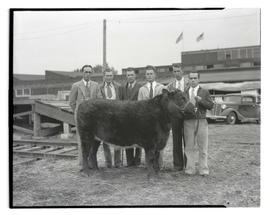 Six men posing with steer
