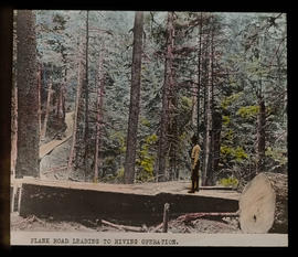 Plank road in forest