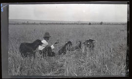 Men with bird chicks in a field