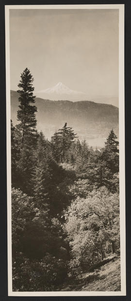 Forested Area with View of Mount Hood