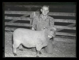Unidentified man with sheep, probably at Pacific International Livestock Exposition