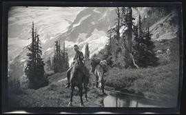Man with packhorses at Mount Rainier National Park