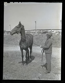 Man with horse