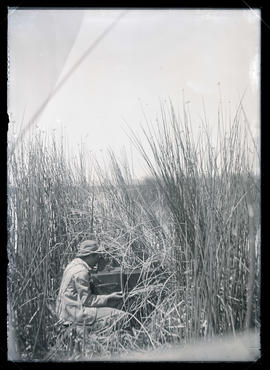 W. L. Finley Photographing Western Grebes