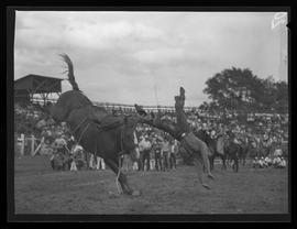Bronc rider at the Pendleton Round-Up