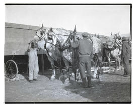 Men with team of horses
