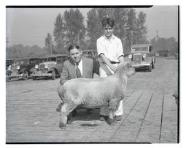 Man and boy with sheep