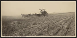 Horses pulling combine harvester near Culver, Oregon