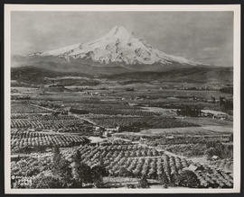 View of Orchards and Mount Hood