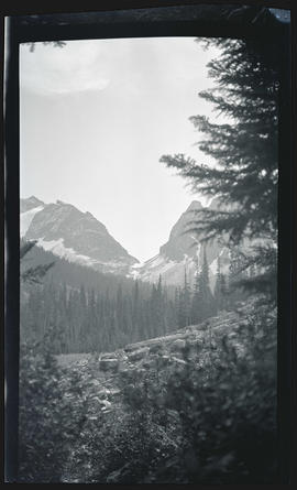 Landscape at Mount Rainier National Park
