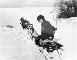 Dogs pulling sled with woman