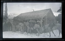 Pack horses at Indian Henry Ranger Station