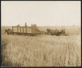 Working to harvest crops in Central Oregon