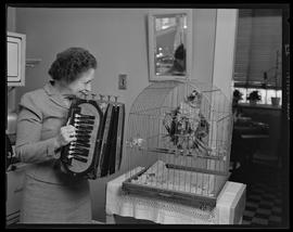 Grace Kern playing accordion for bird
