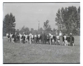 Eleven people with cattle, probably at Pacific International Livestock Exposition