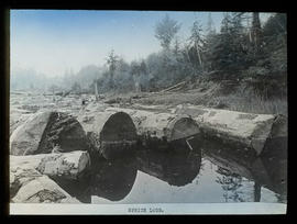 Spruce logs in river