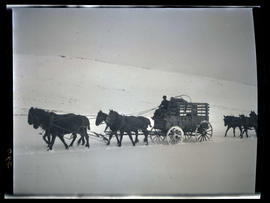 Elk crate wagon in the snow