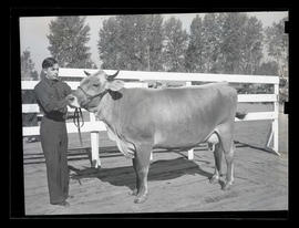 Unidentified man with cow, probably at Pacific International Livestock Exposition