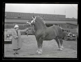Woman with draft horse