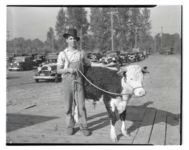 Young man with steer