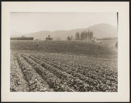 Agricultural workers in strawberry field